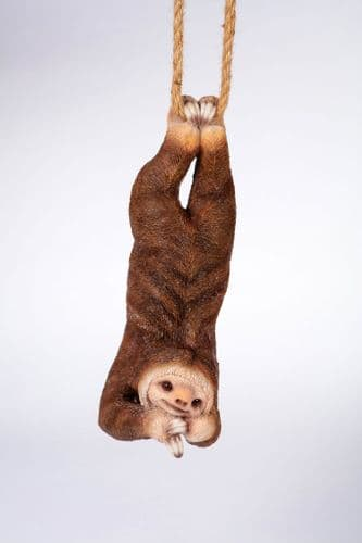 Happy Hanging Sloth